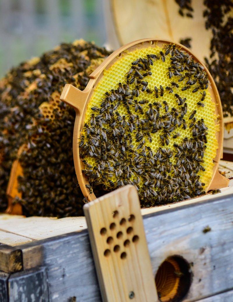 Bienenkugelkasten