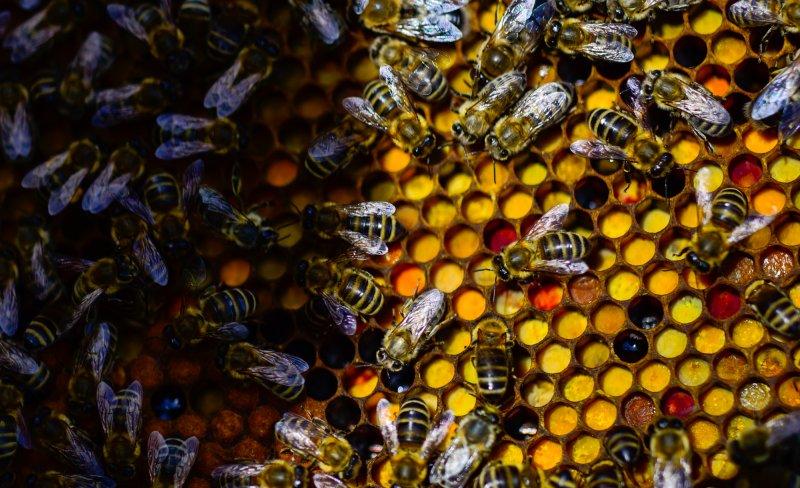 verschiedene Blüten Pollenfarben
